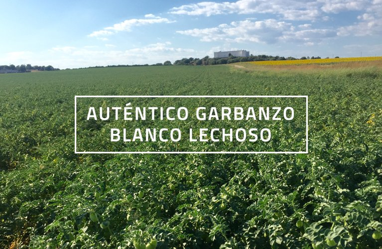 Campo de Tejada II, Huelva - Garbanzos de Escacena
