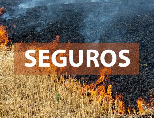 SEGURO DE INCENDIO Y PEDRISCO. APERTURA DE PLAZO !!!